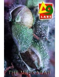 TOP GROW BOX 100% NATURAL PLAGRON * PLAGRON