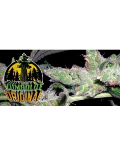 5 UND FEM - FRUITY CHRONIC JUICE (INDICA LINE) * DELICIOUS 5 UND FEMINIZADAS