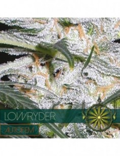 1 UND FEM - AUTO LADY BUG * BIOLOGICAL SEEDS 1 UND FEM
